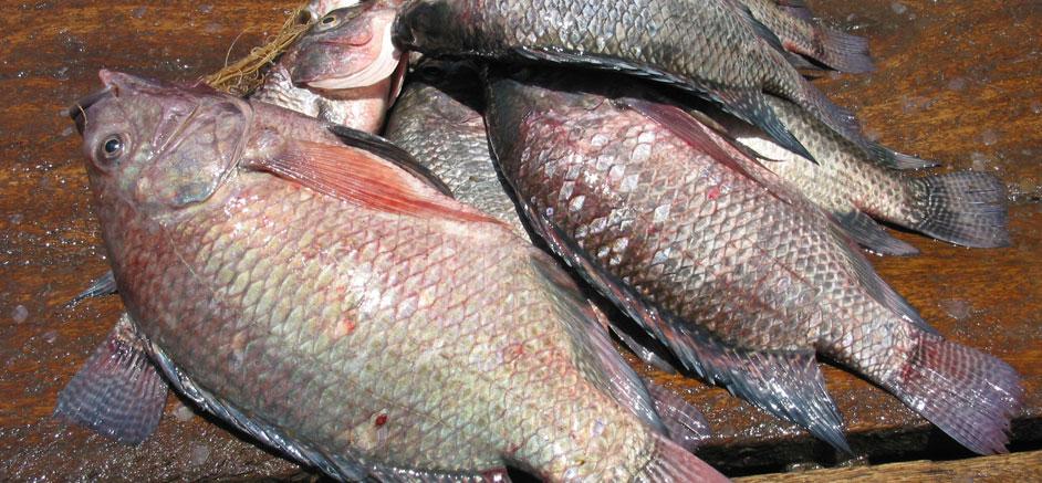 Fish prices double in the Bunyoro sub-region