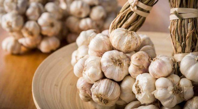A lockdown guide to growing garlic in Uganda