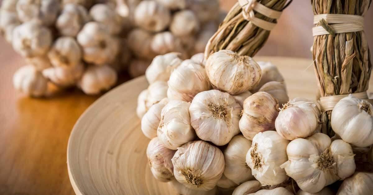 A lockdown guide to growing garlic